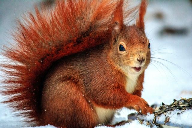 Zajímavosti o zvířatech v zimě
